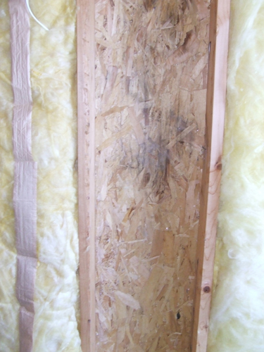 Mold Growth Under Fiberglass Insulation How To Prevent