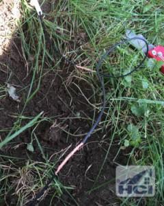 Repairing an Underground Dog Fence-9